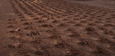 사막의 승리