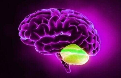 놀랍고도 흥미로운 확산적 사고와 소뇌 관계