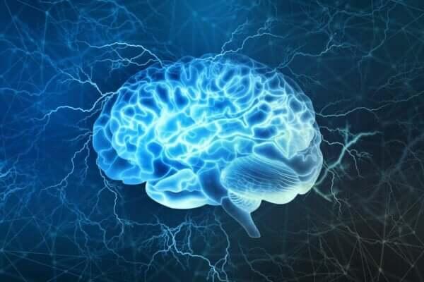 뇌 영역을 공유하는 호기심 그리고 배고픔: 동기 부여