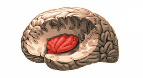 뇌-의-섬피질