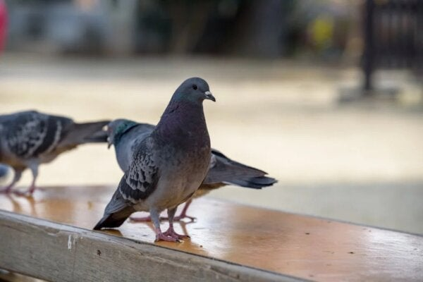 조류 공포증: 새를 무서워하는 이들