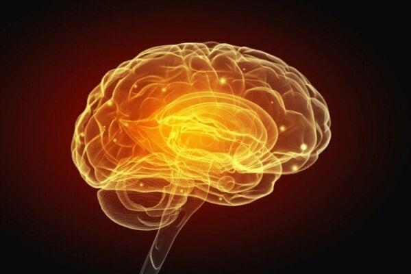 뇌를 변화시키는 이기적인 행동과 이타적인 행동